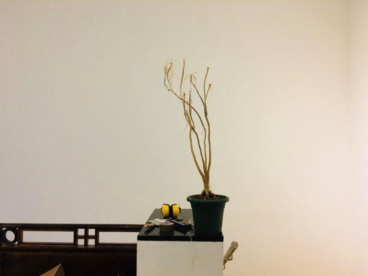 ettevalmistus lillepott